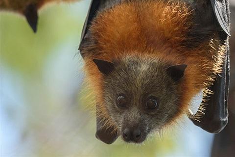 Flying-fox-for-web.jpg