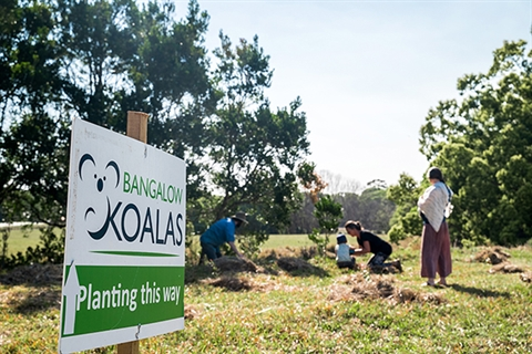 Bangalow Koalas sign